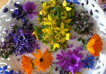 Wildkräuterküche – Thymian und Blüten